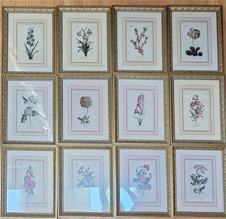 12 Months of Botanical Prints