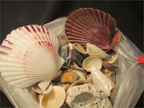 Lot 3 Clear Bag Ocean Sea Shell Assorted Collection