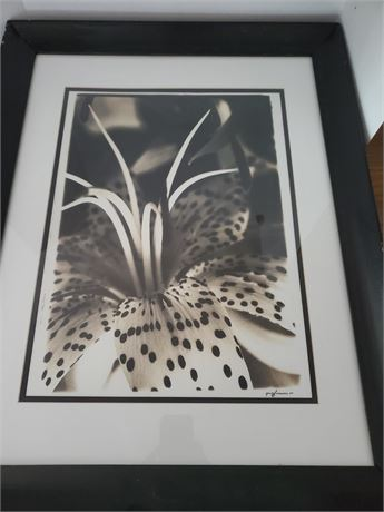 Waxing Moon Photography Lily Photograph Artist Signed