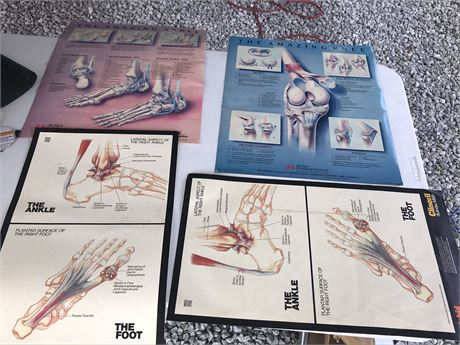 Foot and Knee Anatomy Posters