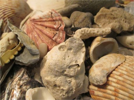 Lot 2 White Bag Ocean Sea Shell Assorted Collection