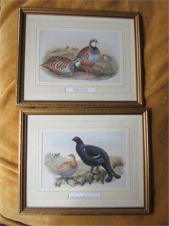 John Gould Bird Prints: Red Legged Partridge & Black Grouse